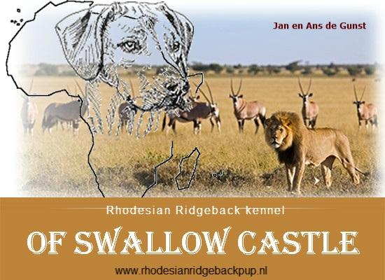 Banner Rhodesian Ridgeback pup