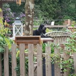 Jamie in tuin